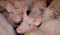 Use of acidulants in pig and poultry farming